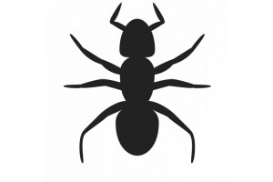Lotta alle formiche maiac - Lotta alle talpe in giardino ...