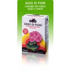 CIFO ASSO DI FIORI KG. 1.0